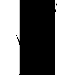 nut-icon