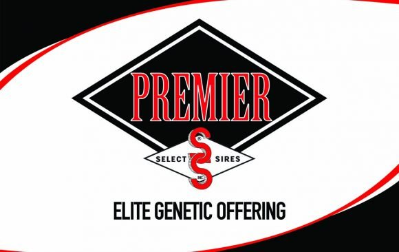 Select Sires Elite Offering Backed by Superior Fertility